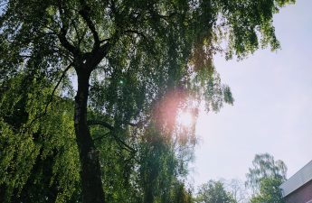 zonnige dag