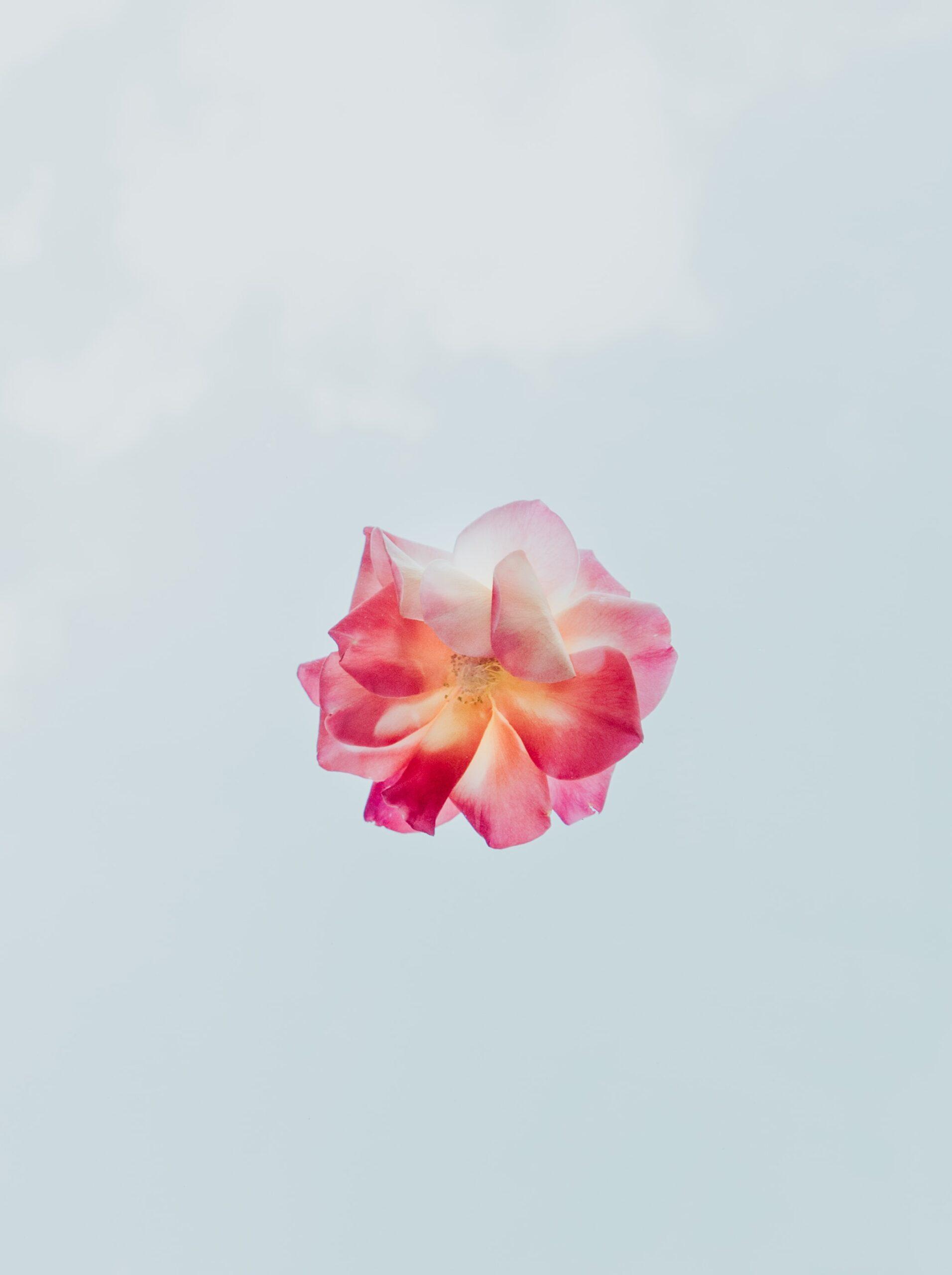 De mooiste bloem